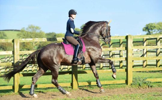 stotfold_gallop