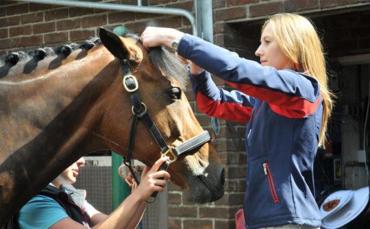 stotfold_horseplatt